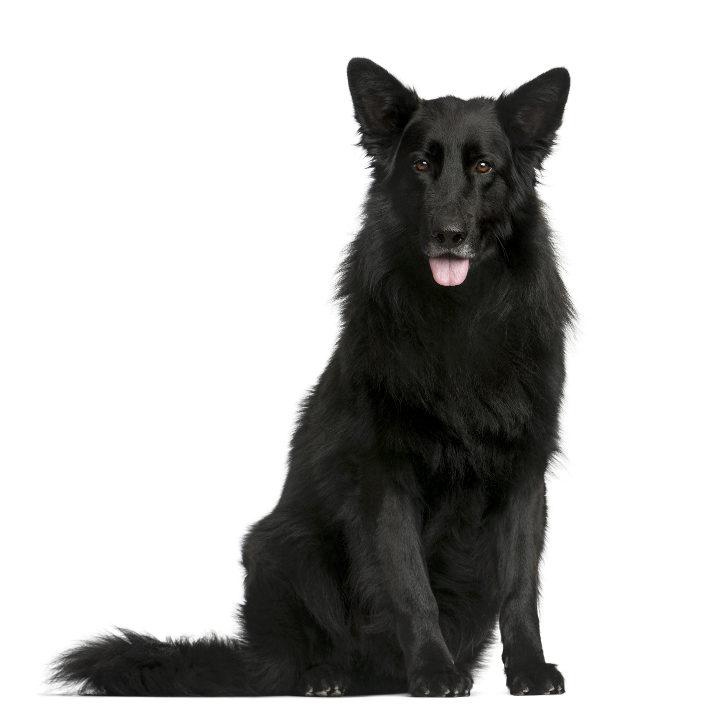 show original title b6 marker Details about  /Belgian shepherd groenendael dog magnet magnet magnetic slate